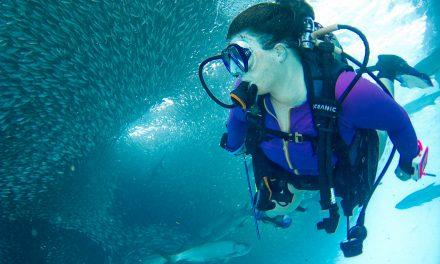 Brands to Watch: Top Waterproof Flashlights for Diving